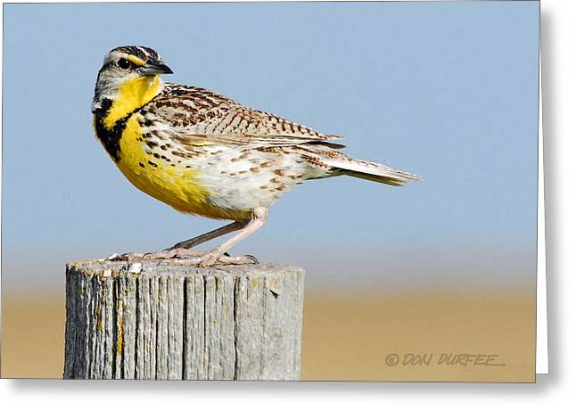 Greeting Card featuring the photograph Meadowlark 1 by Don Durfee