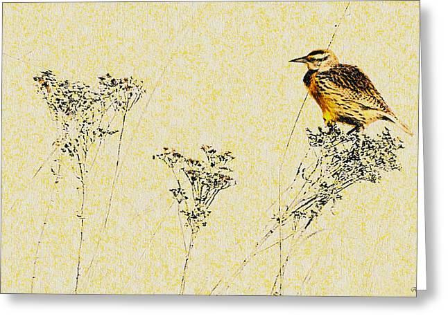 Meadowlark In Kansas Prairie 1 Greeting Card