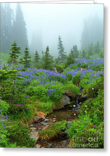 Meadows In The Mist Greeting Card by Mike Dawson