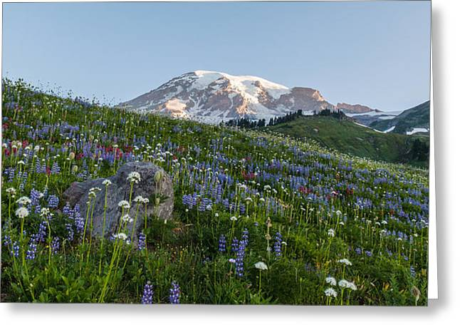Meadows Of Glory Greeting Card by Mike Reid