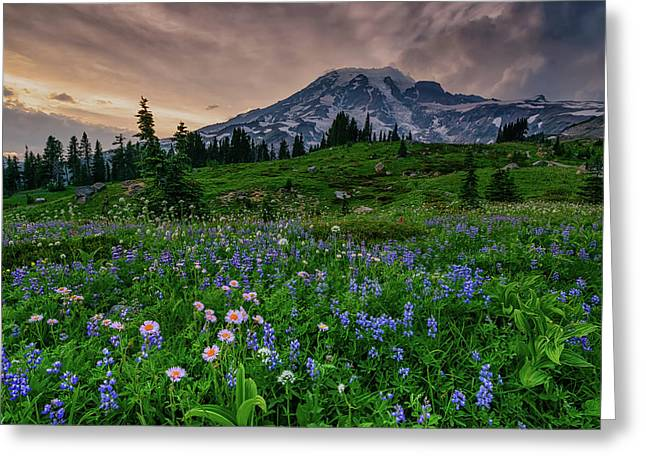 Greeting Card featuring the photograph Meadows Of Heaven by Dan Mihai