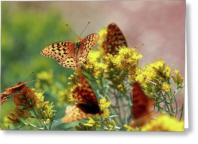 Meagher County Butterflies Greeting Card by Todd Klassy