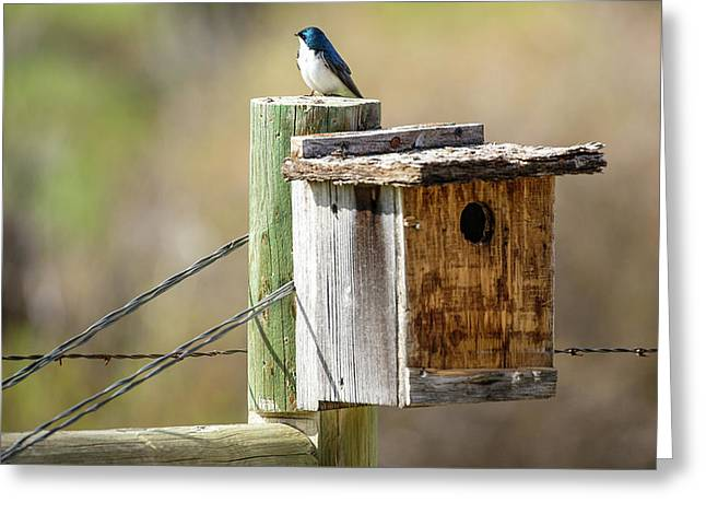 Meagher County Swallow Greeting Card by Todd Klassy
