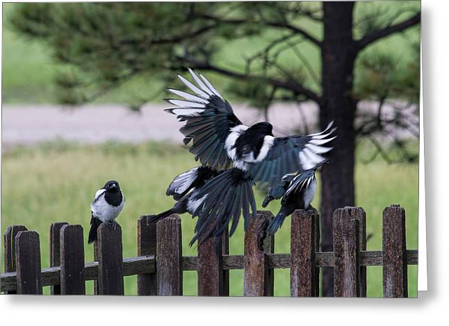 Meals On Wings Greeting Card by Alana Thrower