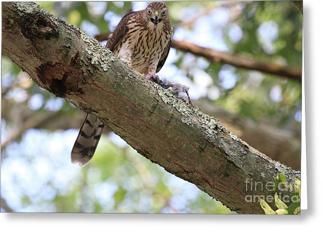 Mean Hawk At Dinner Time Greeting Card