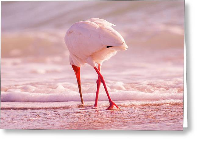 Meandering Beauty Cortez Beach Greeting Card by Betsy Knapp
