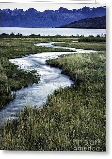 Meandering Creek Greeting Card by Timothy Hacker