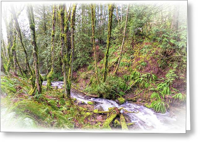 Meditation In The Woods Greeting Card by Spencer McDonald