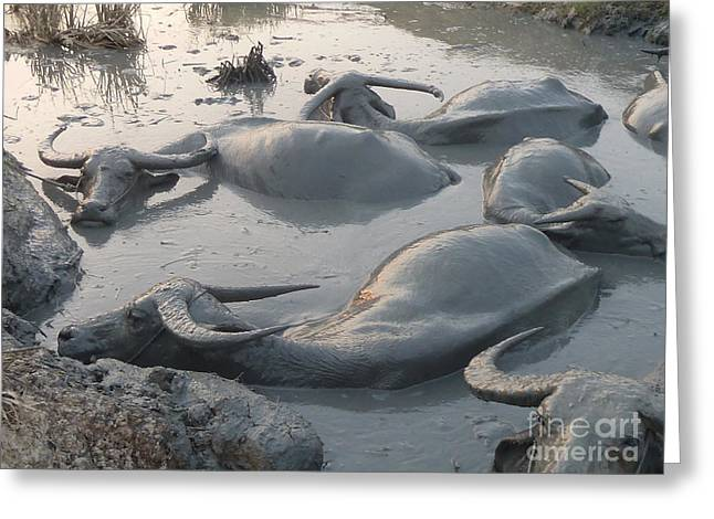 Greeting Card featuring the photograph Medium Shot Of A Group Of Water Buffalos Wallowing In A Mud Hole by Jason Rosette