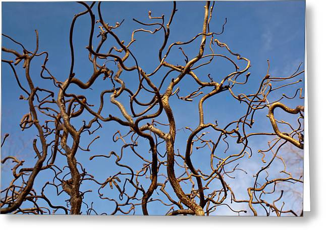 Medusa Limbs Reaching For The Sky Greeting Card
