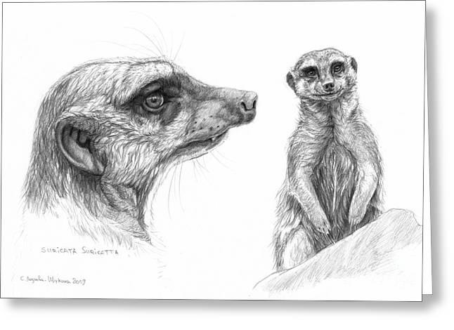 Meerkat - Suricata Suricatta Greeting Card by Svetlana Ledneva-Schukina