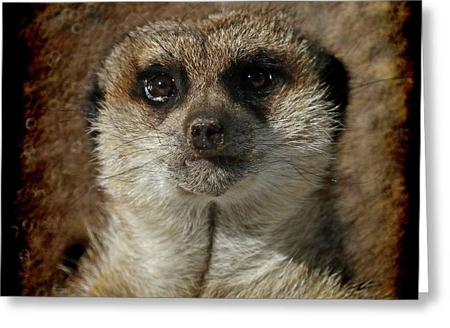 Meerkat 4 Greeting Card by Ernie Echols