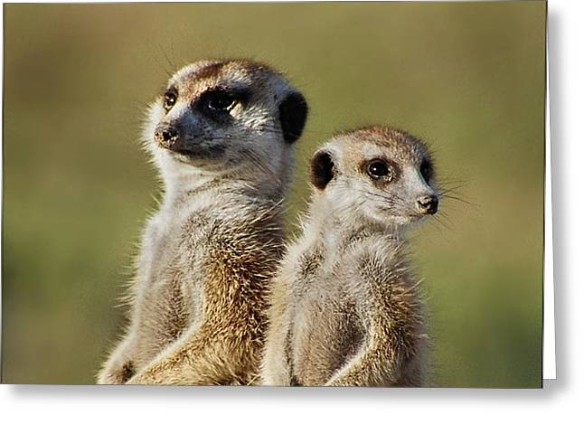 Meerkat Duo Greeting Card