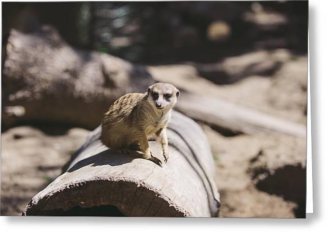 Meerkat Greeting Card by Nastasia Cook