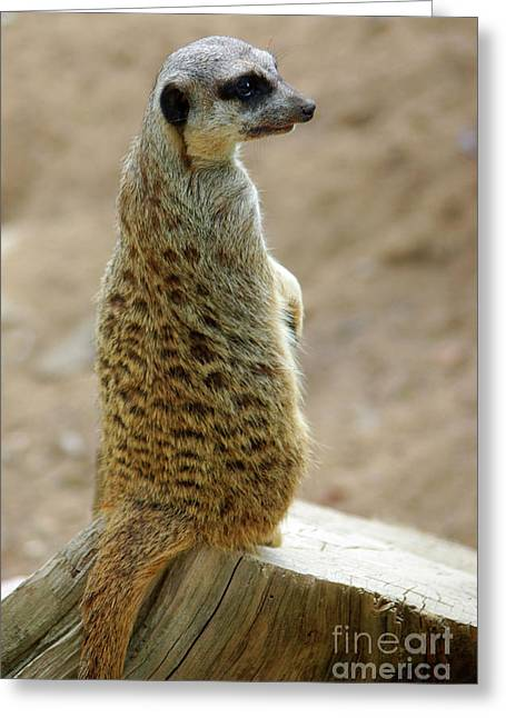 Lookout Greeting Cards - Meerkat Portrait Greeting Card by Carlos Caetano