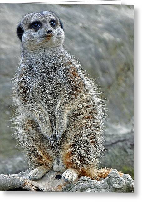 Meerkat Poses Greeting Card