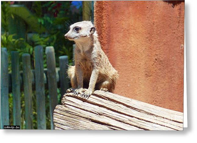 Meerkat Sentry Greeting Card by Methune Hively