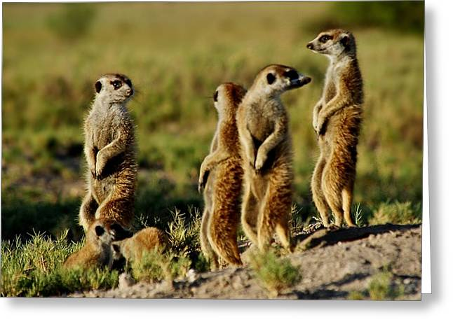 Meerkats Watching Everywhere Greeting Card