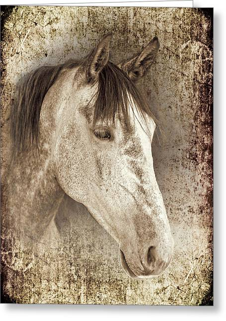 Bred Photographs Greeting Cards - Meet The Andalucian Greeting Card by Meirion Matthias
