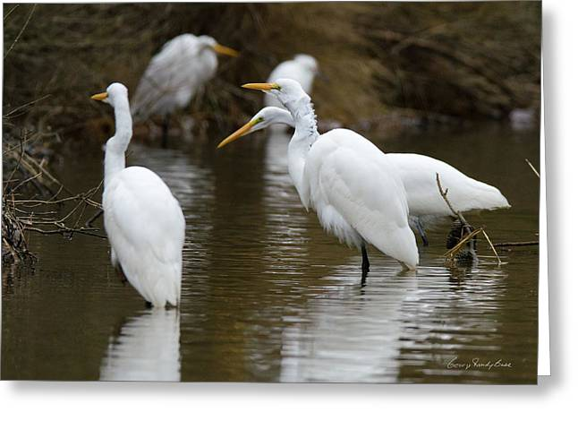 Meeting Of The Egrets Greeting Card