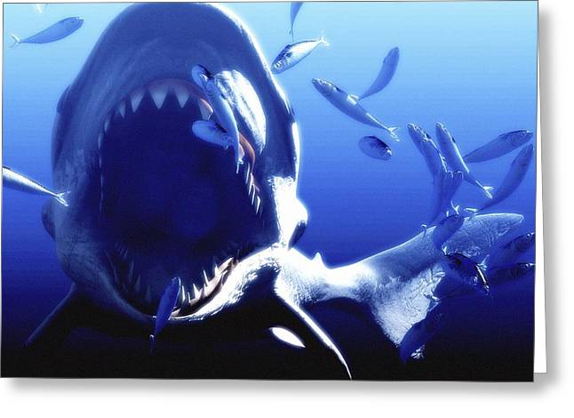 Megalodon Prehistoric Shark Greeting Card by Christian Darkin