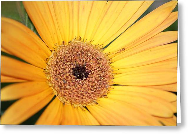 Greeting Card featuring the photograph Mellow Yellow by Ron Read