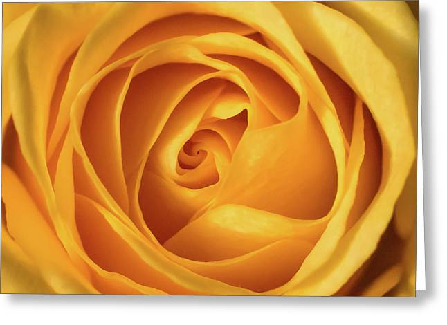 Greeting Card featuring the photograph Mellow Yellow Rose Square by Terry DeLuco