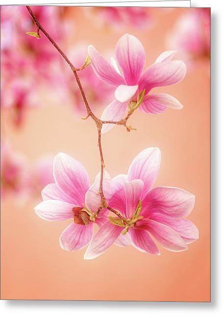 Melodies Of Spring  Greeting Card by Philippe Sainte-Laudy