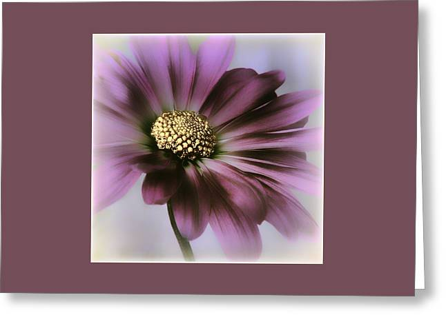 Greeting Card featuring the photograph Memories Of Spring by Darlene Kwiatkowski
