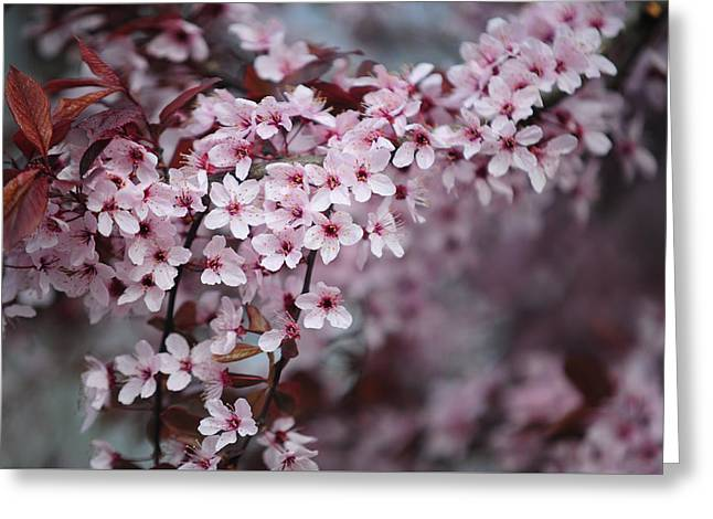 Memory Of Spring. Sakura Blossom Greeting Card by Jenny Rainbow