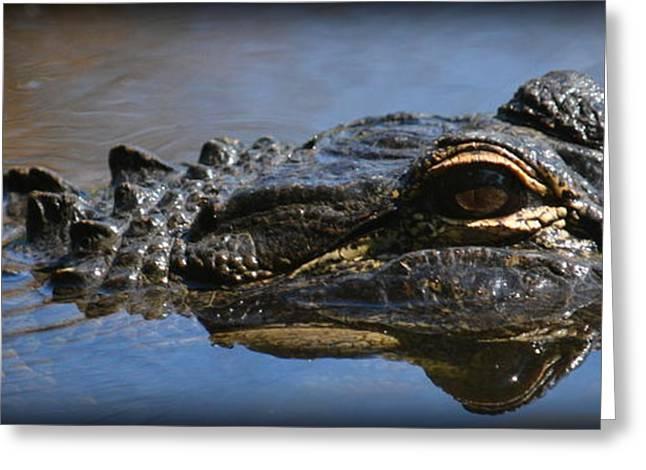 Menacing Alligator Greeting Card