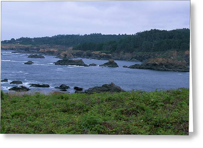 Mendocino Headlands Greeting Card by Soli Deo Gloria Wilderness And Wildlife Photography
