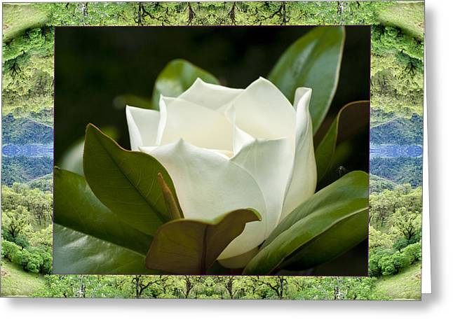 Greeting Card featuring the photograph Mendocino Magnolia by Bell And Todd
