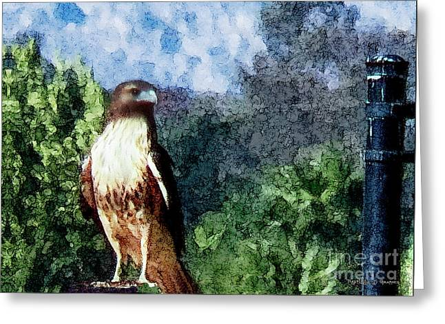 Menifee Falcon Greeting Card
