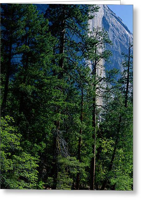 Merced River And El Capitan Yosemite Greeting Card by Panoramic Images