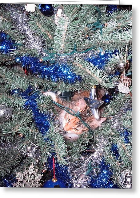 Merry Christmas Kitty Greeting Card by CGHepburn Scenic Photos