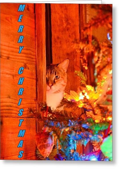 Merry Christmas Waiting For Santa Greeting Card