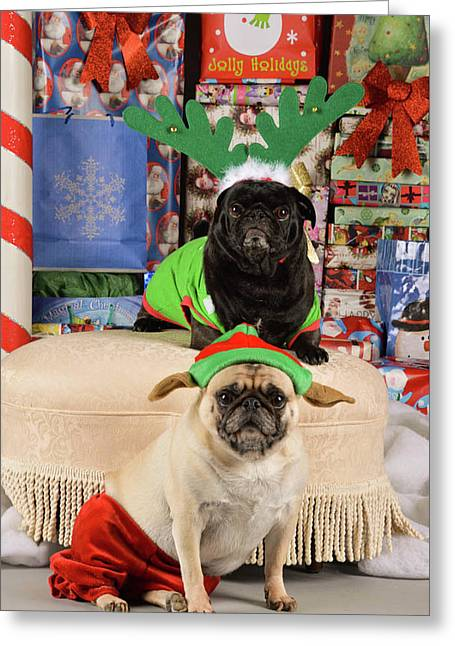 Merry Pug-mas Greeting Card by Trish Tritz