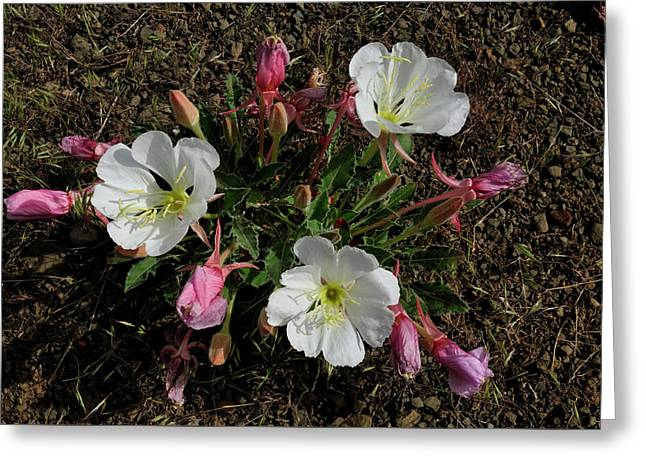 Mesa Blooms Greeting Card