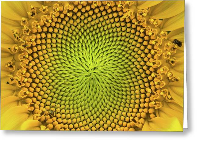 Greeting Card featuring the photograph Mesmerizing by Bill Pevlor