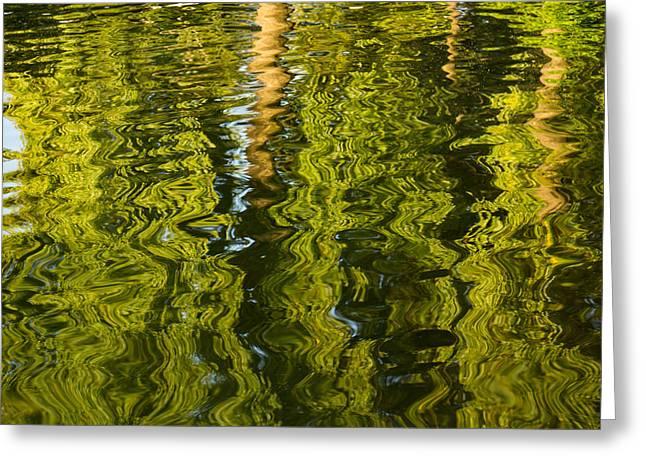 Mesmerizing Summer - Reflecting On Green Trees - Two Greeting Card by Georgia Mizuleva