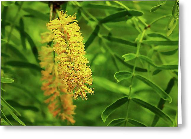 Mesquite Bloom Greeting Card