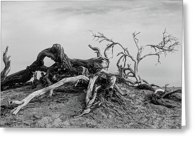 Mesquite Roots - Death Valley 2015 Greeting Card