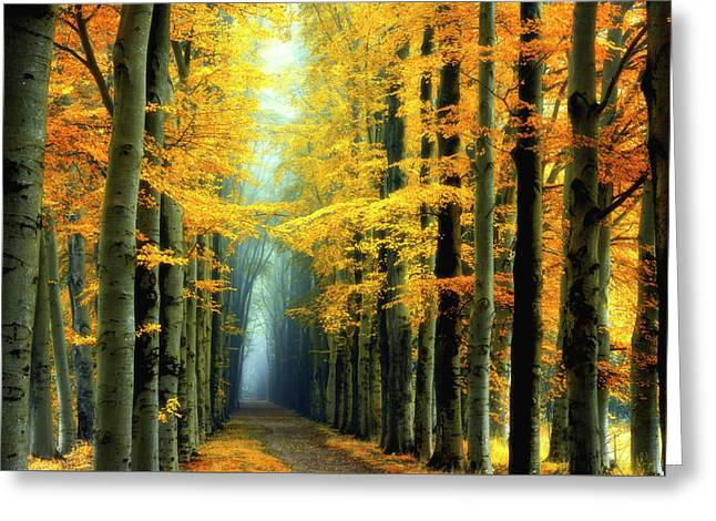 Messengers Of Light Greeting Card by Janek Sedlar