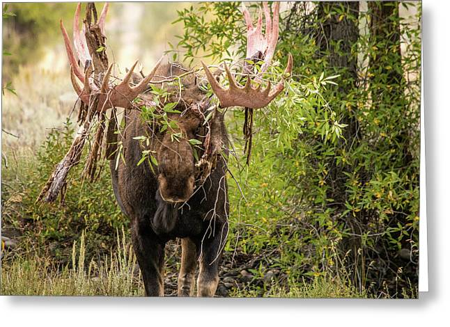 Greeting Card featuring the photograph Messy Moose by Mary Hone