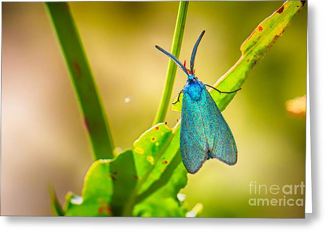 Metallic Forester Moth Greeting Card by Jivko Nakev