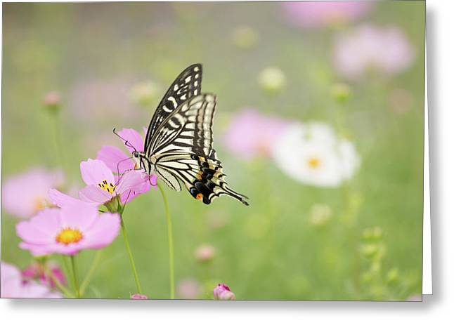 Mexican Aster With Butterfly Greeting Card