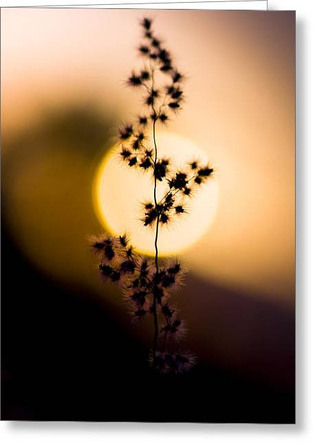 Mexican Desert Sunset Greeting Card by Jorgo Photography - Wall Art Gallery