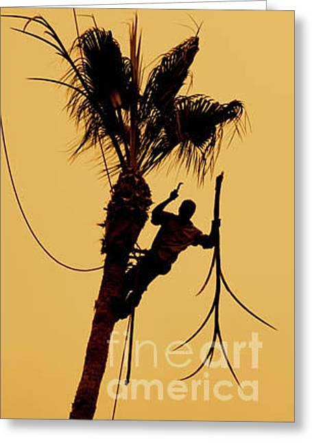 Mexican Fan Palm Greeting Card by Maureen J Haldeman
