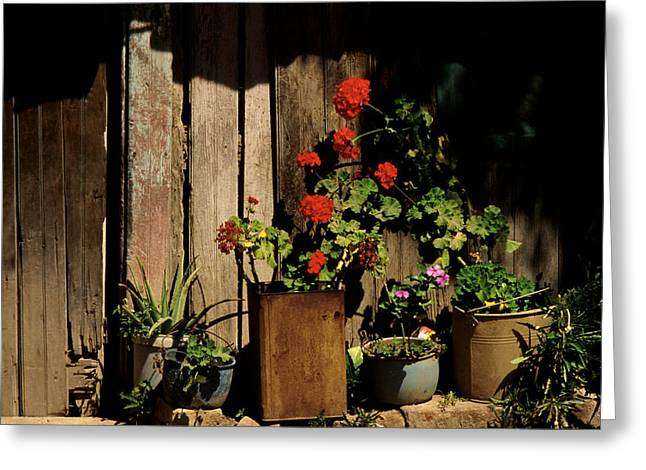 Mexican Geraniums Greeting Card by Jerry McElroy